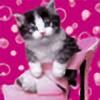 BULLE31's avatar