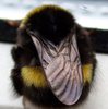 Bumblebee005's avatar