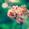 Bumblebee1988's avatar