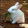 Bunniesandsheep's avatar