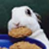 bunnybiscuit's avatar