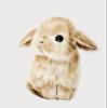 BunnyFluff3658's avatar