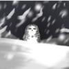 BurntOwl521's avatar
