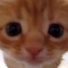buttercupfrog's avatar