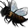 BuzzpH7's avatar