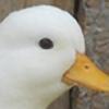 C1NGL's avatar