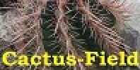 Cactus-Field's avatar