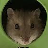 CactusPlanty's avatar
