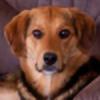caitlyn1701's avatar