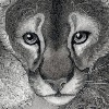 CalciteMink1610's avatar