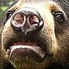 CaliBears's avatar