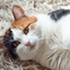calicocatsRose's avatar