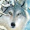 CanineLOVER2002's avatar