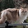 cantloginops1's avatar
