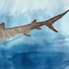 Carcharhinidae's avatar
