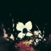 cardiaccoyote's avatar