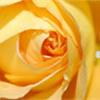 carebearyogi's avatar