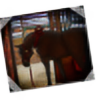 carlmoon's avatar