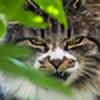 CarolaPhotography's avatar