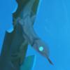carriercarry's avatar