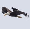 CastleCrashers374989's avatar
