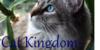 Cat-Kingdom