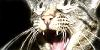 cat-snapshots