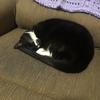 CatGirl1296's avatar