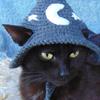 Catgotslap's avatar