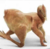 catlovera1's avatar