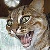 Catrantula's avatar