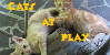 Cats-at-Play