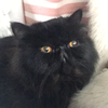 catsevenqi's avatar