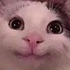 catstuckintree's avatar