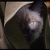 Catvador's avatar