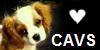 Cav-Club's avatar