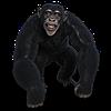 CD-MM's avatar