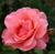 cdavis22photography's avatar