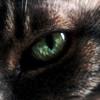 cecil92's avatar