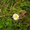 cecilia-weasley's avatar