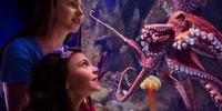 Cephalopod-Love