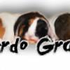 CerdoGran's avatar