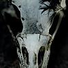 Cerulean-Crow's avatar