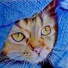CesarKibler's avatar