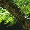 ceylon-tae's avatar