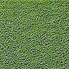 CFRfan's avatar