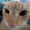 ChainclawOfBloodclan's avatar
