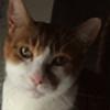 Cham-berlin's avatar