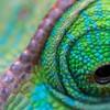 ChameleonScales's avatar