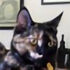 channelgirl's avatar